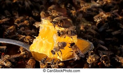 Honey comb - Bee takes the nectar and honey from honeycomb...