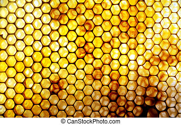 honey comb - Honey Comb in sunlight