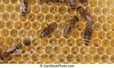 Honey combs with nectar, honey and bees. - Bees build...