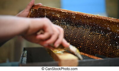 Honey extraction process. Footage of a beekeeper uncapping ...