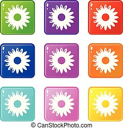 Honey flower icons set 9 color collection