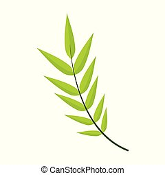 Honey Locust Leaves Vector Illustration Graphic Design