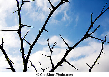 Winter Honey Locust tree thorns against clouds and blue sky.