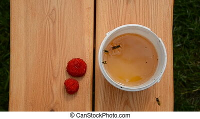honey on the table and wasps