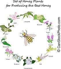 planty set for produsing the best honey - Honey planty set...