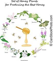 Honey planty set for produsing the best honey for banner or...