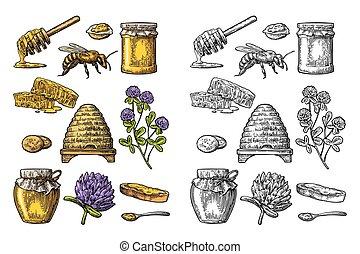 Honey set. Jars of honey, bee, hive, clover, honeycomb. Vector vintage engraved illustration