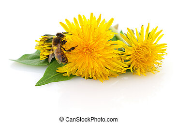 Honeybee and yellow flower