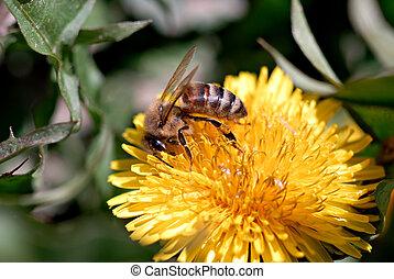 Honeybee Macro II