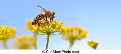 honeybee, oogst, stuifmeel, van, bloeiende bloemen