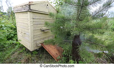 Honeybee swarm - Beekeeper smokes bee swarm. bee smoker. bee...