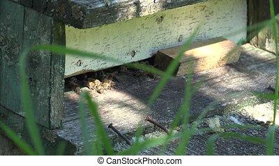 honeybees fly into wooden beehive entrance in green garden....