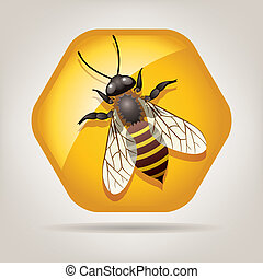 honeycell, vector, trabajando, abeja