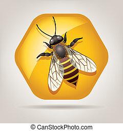 honeycell, wektor, pracujący, pszczoła