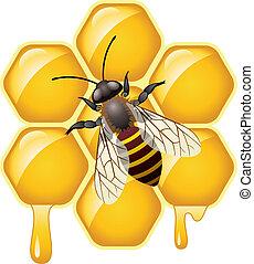 honeycells, vektor, arbejder, bi