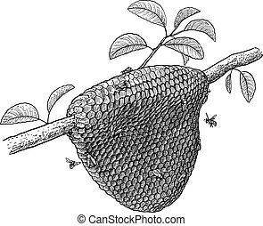 Honeycomb and bees on tree illustration, drawing, engraving, ink, line art, vector