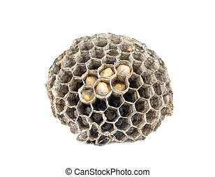 Honeycomb paper wasp - Larvae of wasps in the honeycomb cell...