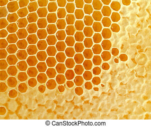 Honeycomb or honey comb background created by bees as a...