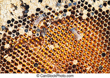 honeycomb with working bee in sunlight
