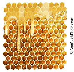 Honeycombs, honey vector illustration