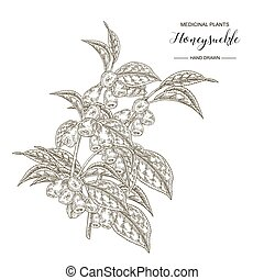 Honeysuckle branch. Hand drawn berries and leaves of lonicera japonica. Medical plants collection. Vector illustration botanical. Engraving style.