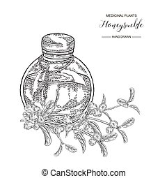 Honeysuckle branch with berries. Lonicera japonica. Medical plants hand drawn. Vector botanical illustration. Black and white graphic.