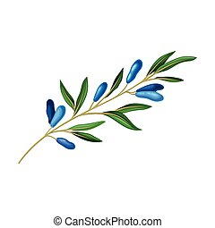 Honeysuckle Branch with Blue Oblong Berries and Green Fibrous Leaves Vector Illustration. Seasonal Edible Garden Herb