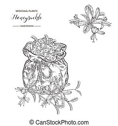 Honeysuckle branch with flowers and berries. Lonicera japonica. Medical plants hand drawn. Vector botanical illustration. Black and white graphic.