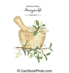 Honeysuckle branch with flowers and leaves. Lonicera japonica. Medical plants hand drawn. Vector botanical illustration.