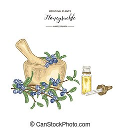 Honeysuckle branch with ripe berries. Lonicera japonica. Medical plants hand drawn. Vector botanical illustration.