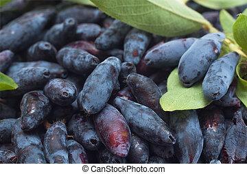 Fresh berries of a honeysuckle close up