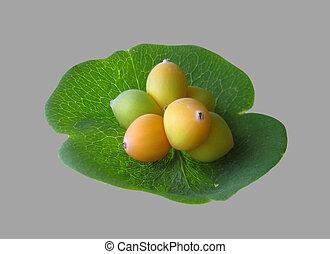 Honeysuckle green berries