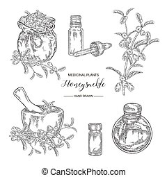 Honeysuckle plant set. Flowers and berries. Lonicera japonica. Medical plants hand drawn. Vector botanical illustration. Black and white graphic.