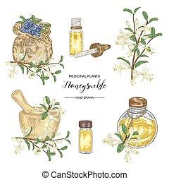 Honeysuckle plant set. Flowers and ripe berries. Medical plants hand drawn. Vector botanical illustration.