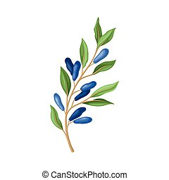 Honeysuckle Twig with Green Leaves Isolated on White Background Vector Illustration. Organic Vitamin Food Concept