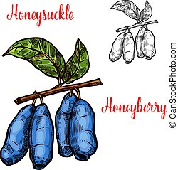 Honeysuckle berry sketch icon. Vector isolated symbol of fresh farm grown honeyberry fruit on branch for juice and jam dessert or grocery store and farm market design