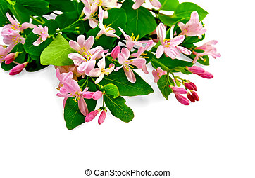 Honeysuckle with pink flowers bouquet