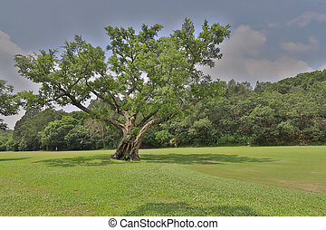 hong, palo de golf, país, kong, curso