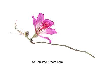 hongkong, orchidee
