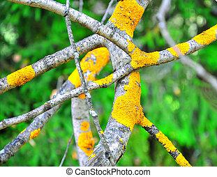 hongo, amarillo, musgo