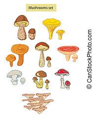 hongos, detallado, conjunto, ilustración