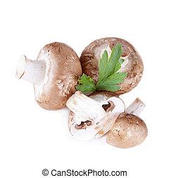 hongos frescos, orgánico, champignon