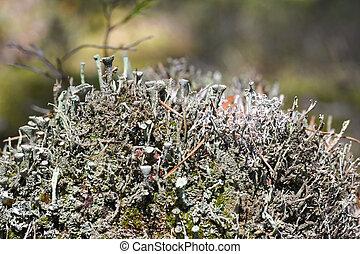 hongos, parásitos, crecer, en, un, árbol muerto, primer...