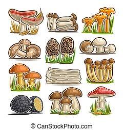 hongos, vector, conjunto, comestible