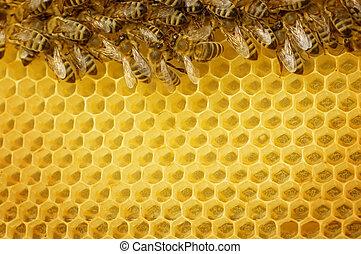 honing, bijtjes, grens