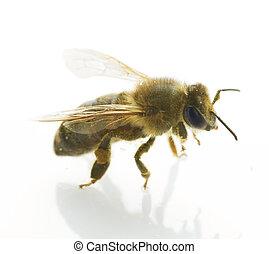 honing, witte , vrijstaand, bij