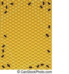 honning, grænse, bi