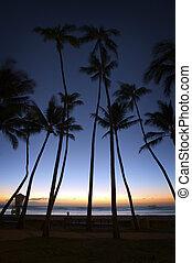 Palm trees line the beach as the sun sets on Waikiki.