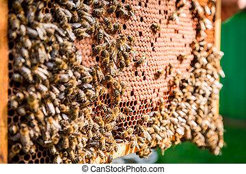 honung, bin, ram, fyllda