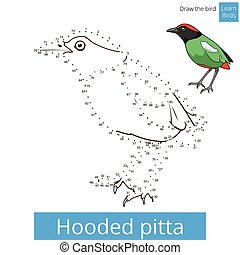 Hooded pitta bird learn to draw vector - Hooded pitta learn...